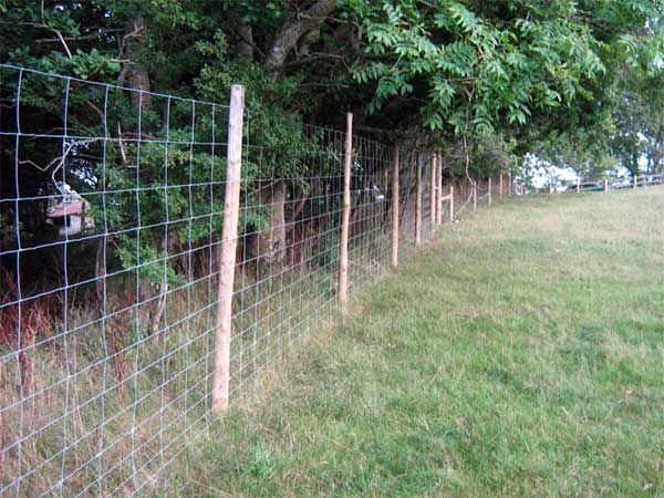 How To Grow Ornamental Grasses In Your Yard in addition African Antelopes in addition Tru Fence also candjfencing   deerfences also Homemade Hog Trap. on deer fence types